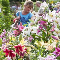 RHS Wisley Garden Show