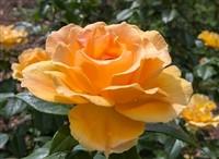 RHS Wisley Flower Show & Savill Gardens