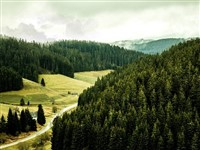 Expeditions through the Rugged Black Forest